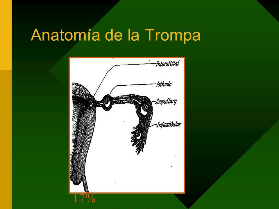 Anatomía de la Trompa 95% Tubárico -55% ampular -20-25% itsmico