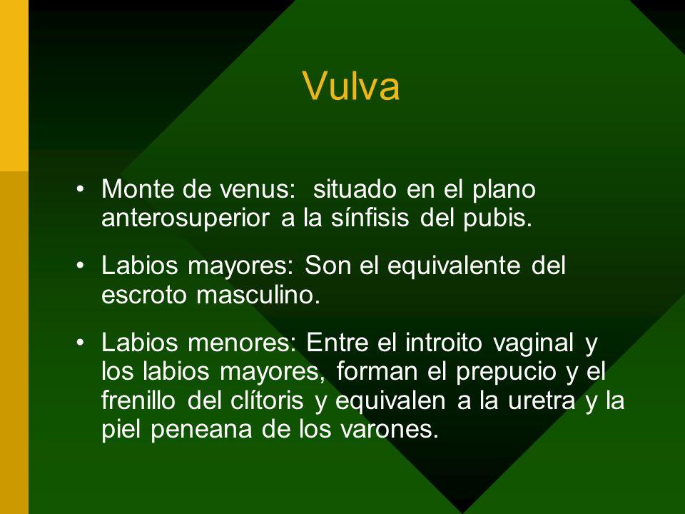 Vulva Monte de venus: situado en el plano anterosuperior a la sínfisis del pubis. Labios mayores: Son el equivalente del escroto masculino.