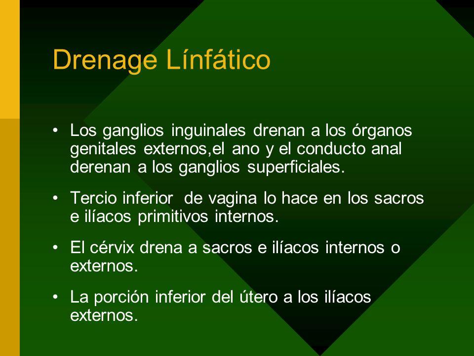 Drenage Línfático Los ganglios inguinales drenan a los órganos genitales externos,el ano y el conducto anal derenan a los ganglios superficiales.