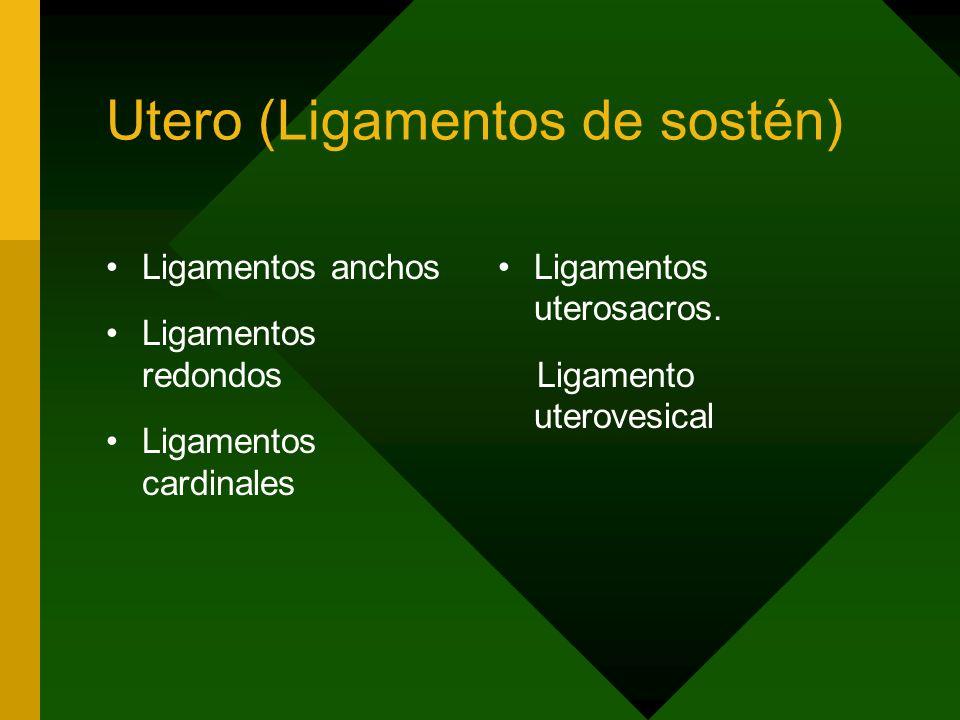 Utero (Ligamentos de sostén)