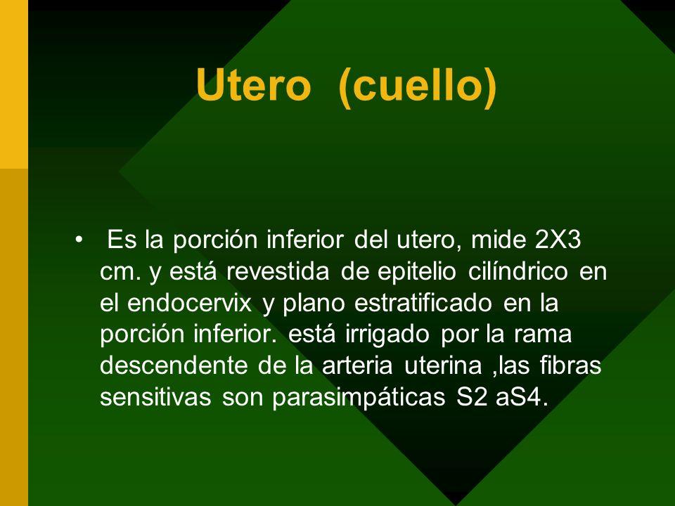 Utero (cuello)
