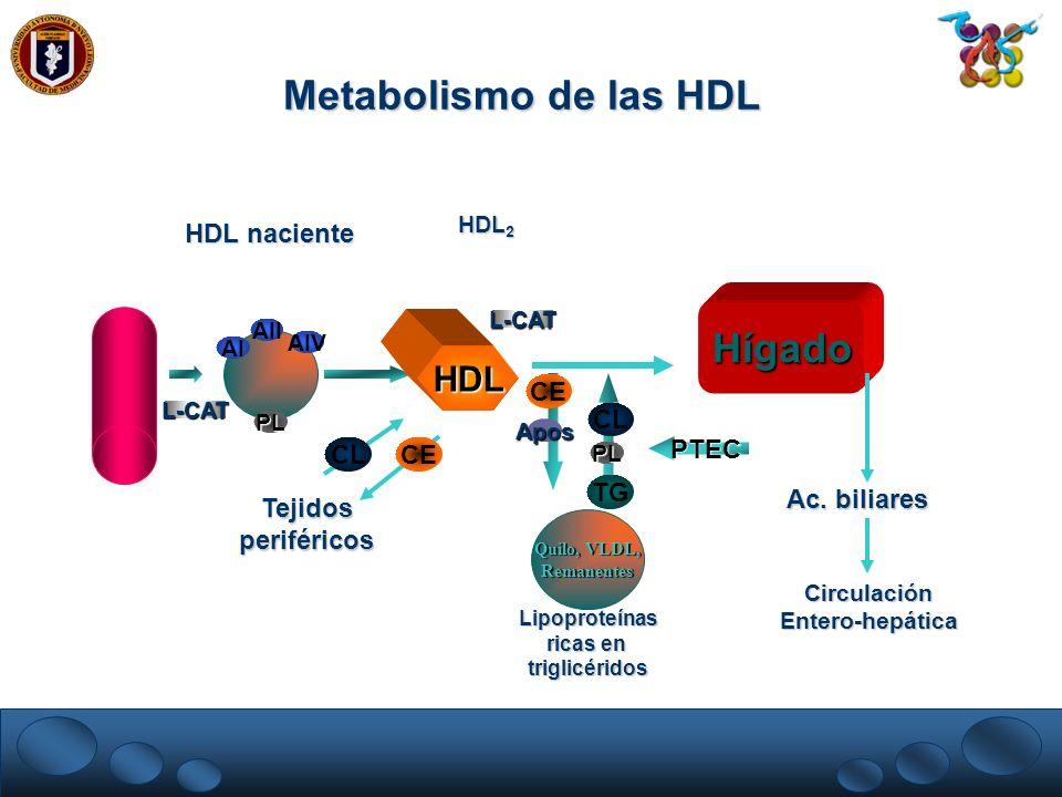 Metabolismo de las HDL Hígado