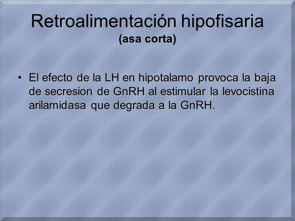 Retroalimentación hipofisaria (asa corta)