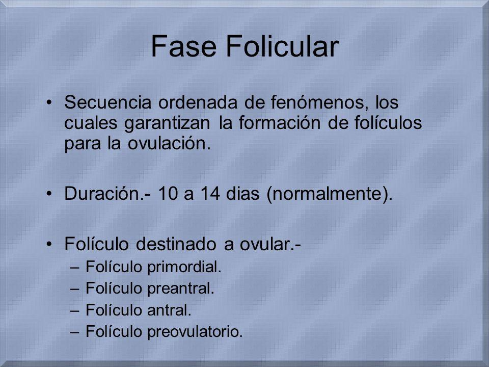 Fase Folicular Secuencia ordenada de fenómenos, los cuales garantizan la formación de folículos para la ovulación.