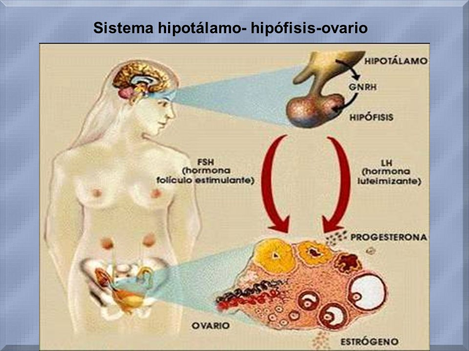 Sistema hipotálamo- hipófisis-ovario
