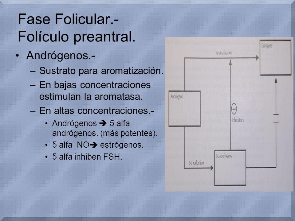 Fase Folicular.- Folículo preantral.