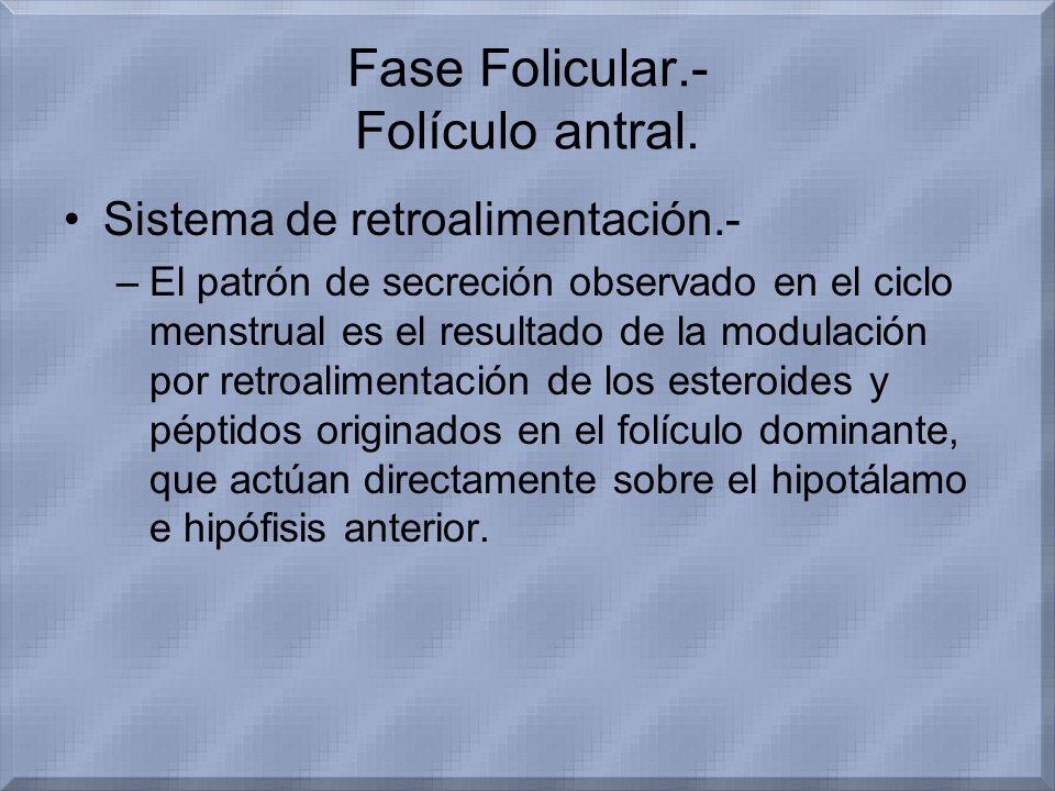 Fase Folicular.- Folículo antral.