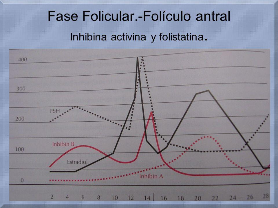 Fase Folicular.-Folículo antral Inhibina activina y folistatina.