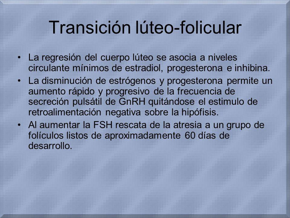 Transición lúteo-folicular