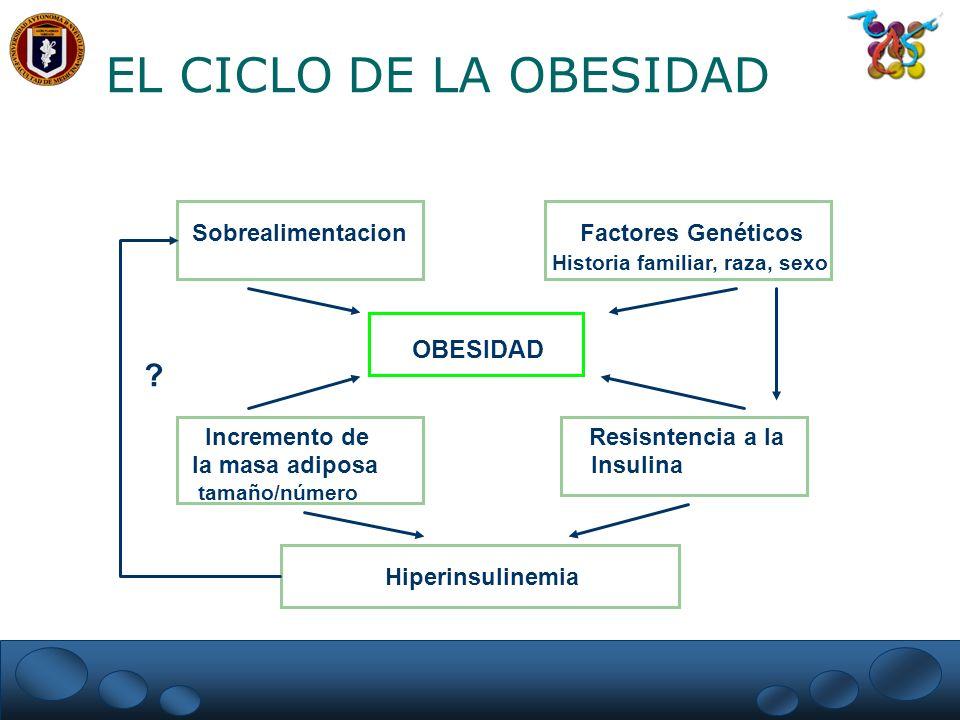 EL CICLO DE LA OBESIDAD Sobrealimentacion Factores Genéticos