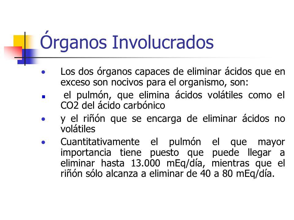 Órganos Involucrados Los dos órganos capaces de eliminar ácidos que en exceso son nocivos para el organismo, son:
