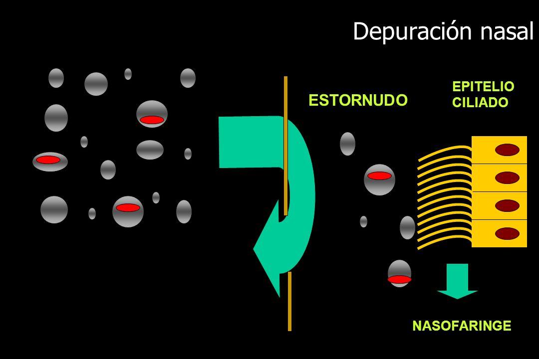 Depuración nasal EPITELIO CILIADO ESTORNUDO NASOFARINGE