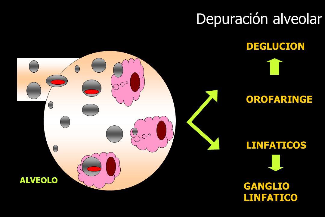 Depuración alveolar DEGLUCION OROFARINGE LINFATICOS GANGLIO LINFATICO