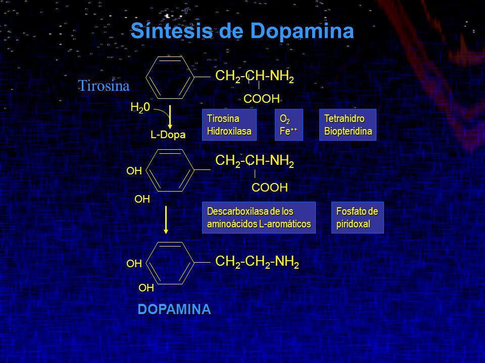 Síntesis de Dopamina Tirosina CH2-CH-NH2 CH2-CH-NH2 CH2-CH2-NH2