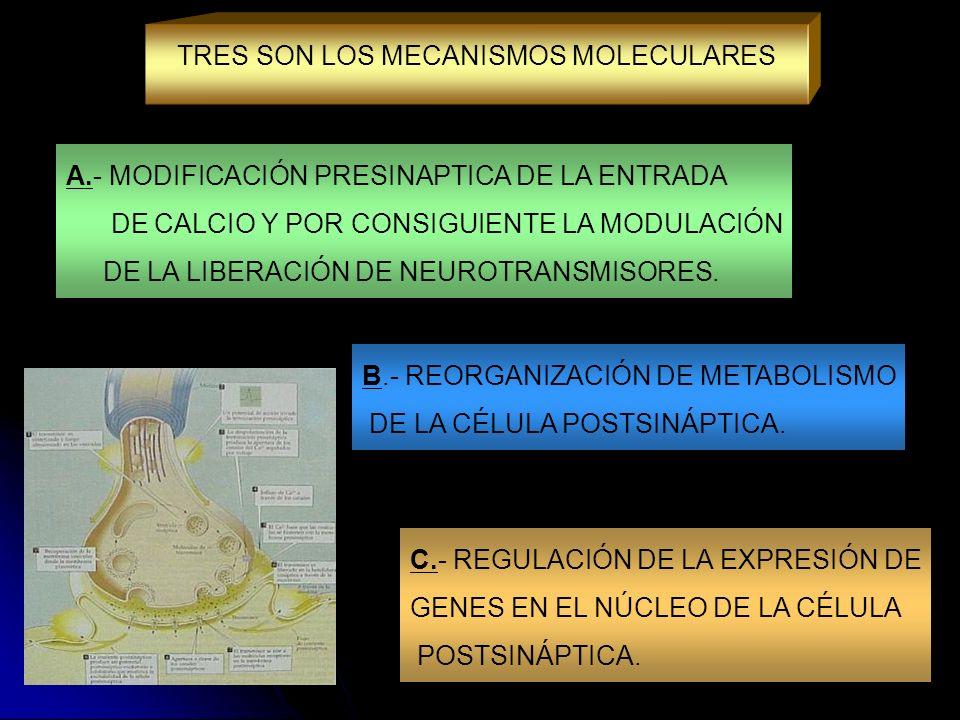 TRES SON LOS MECANISMOS MOLECULARES