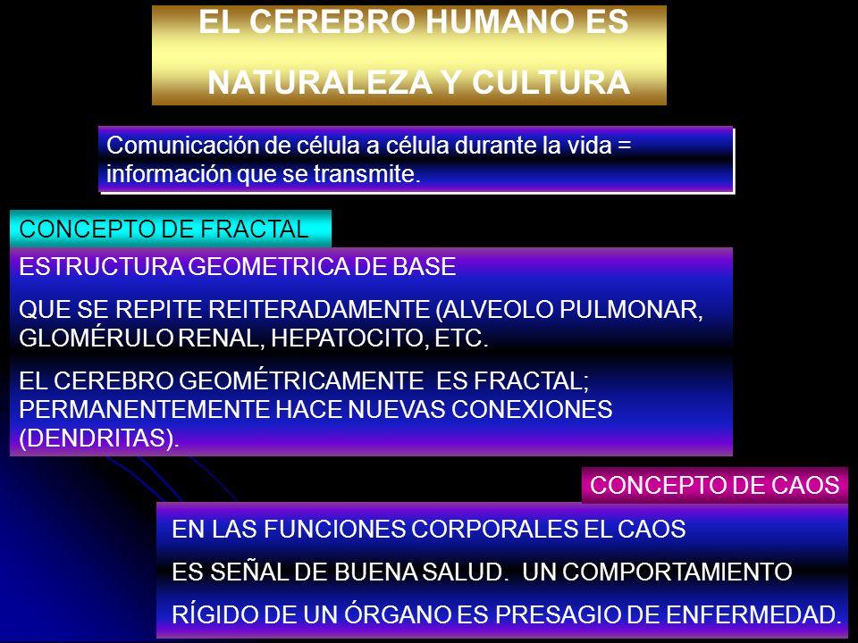 EL CEREBRO HUMANO ES NATURALEZA Y CULTURA