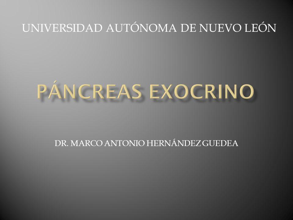 DR. MARCO ANTONIO HERNÁNDEZ GUEDEA