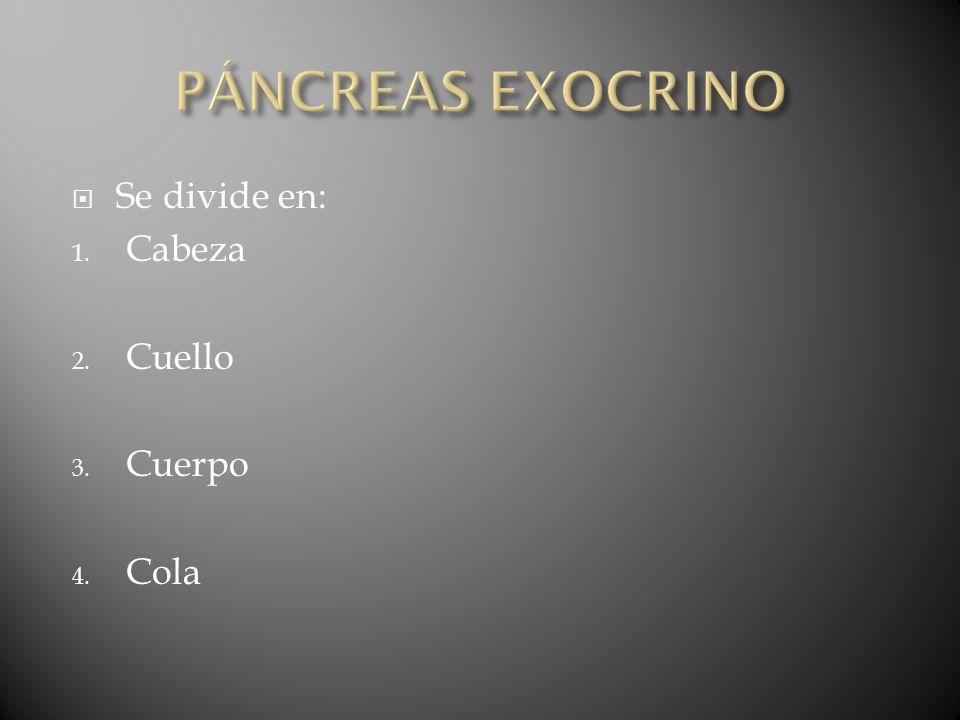 PÁNCREAS EXOCRINO Se divide en: Cabeza Cuello Cuerpo Cola