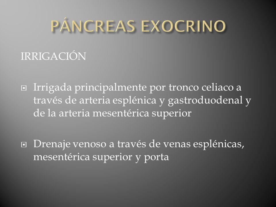 PÁNCREAS EXOCRINO IRRIGACIÓN