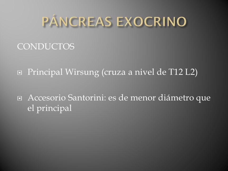 PÁNCREAS EXOCRINO CONDUCTOS