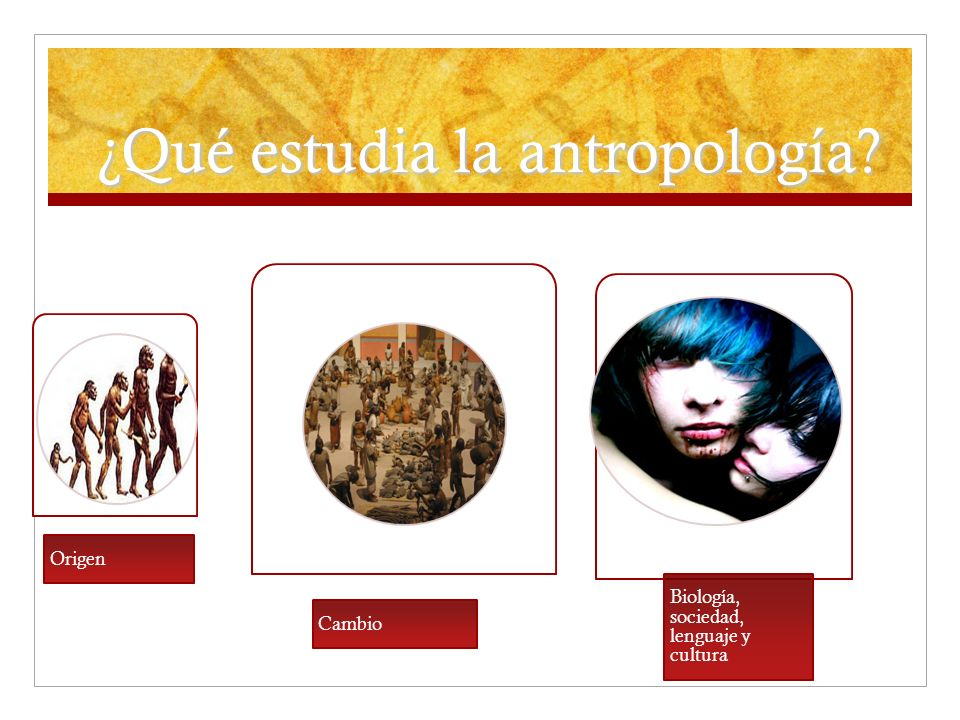 ¿Qué estudia la antropología