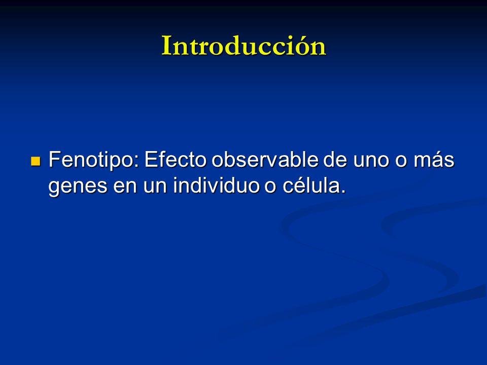 Introducción Fenotipo: Efecto observable de uno o más genes en un individuo o célula.