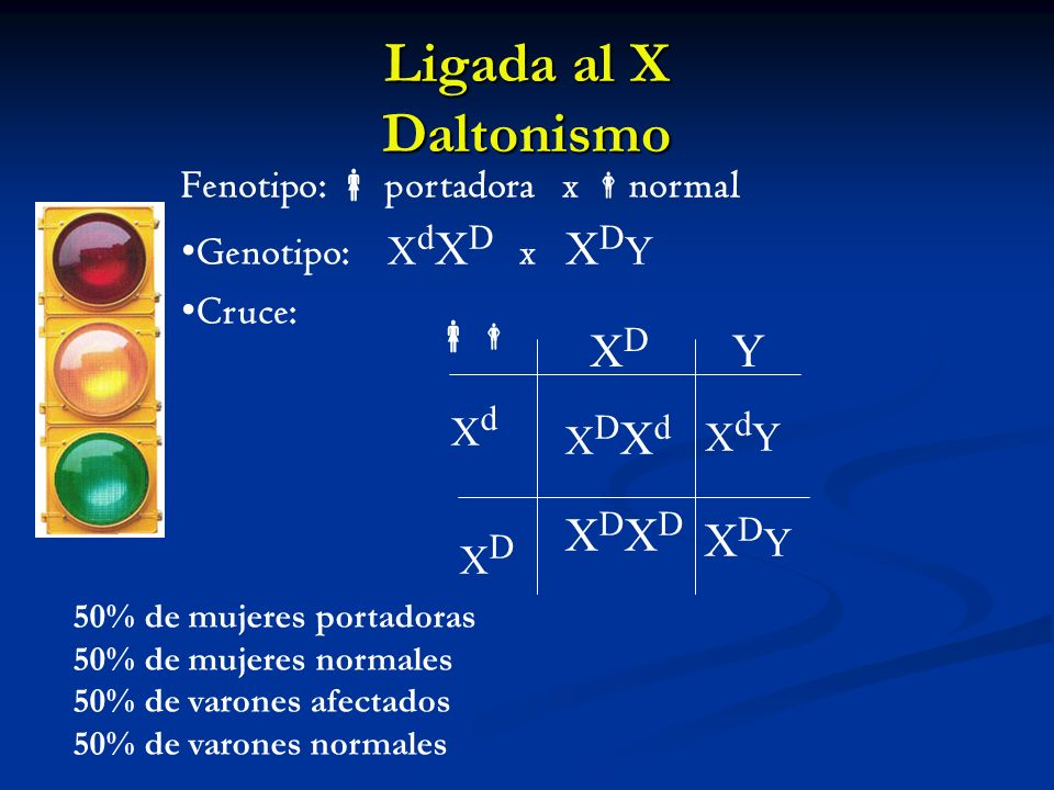 Ligada al X Daltonismo XD Y XDXD XDY Fenotipo:  portadora x normal