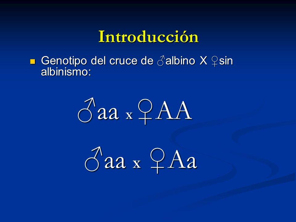 ♂aa X ♀AA ♂aa X ♀Aa Introducción