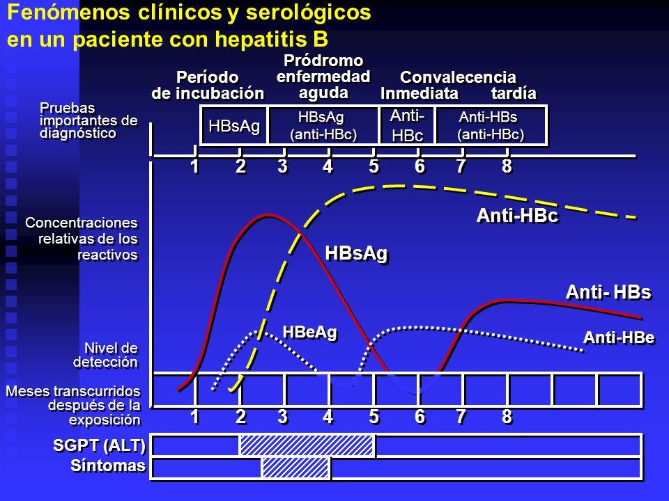 Fenómenos clínicos y serológicos en un paciente con hepatitis B