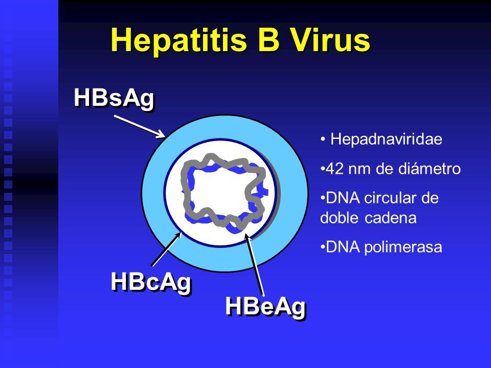 Hepatitis B Virus HBsAg HBcAg HBeAg Hepadnaviridae 42 nm de diámetro