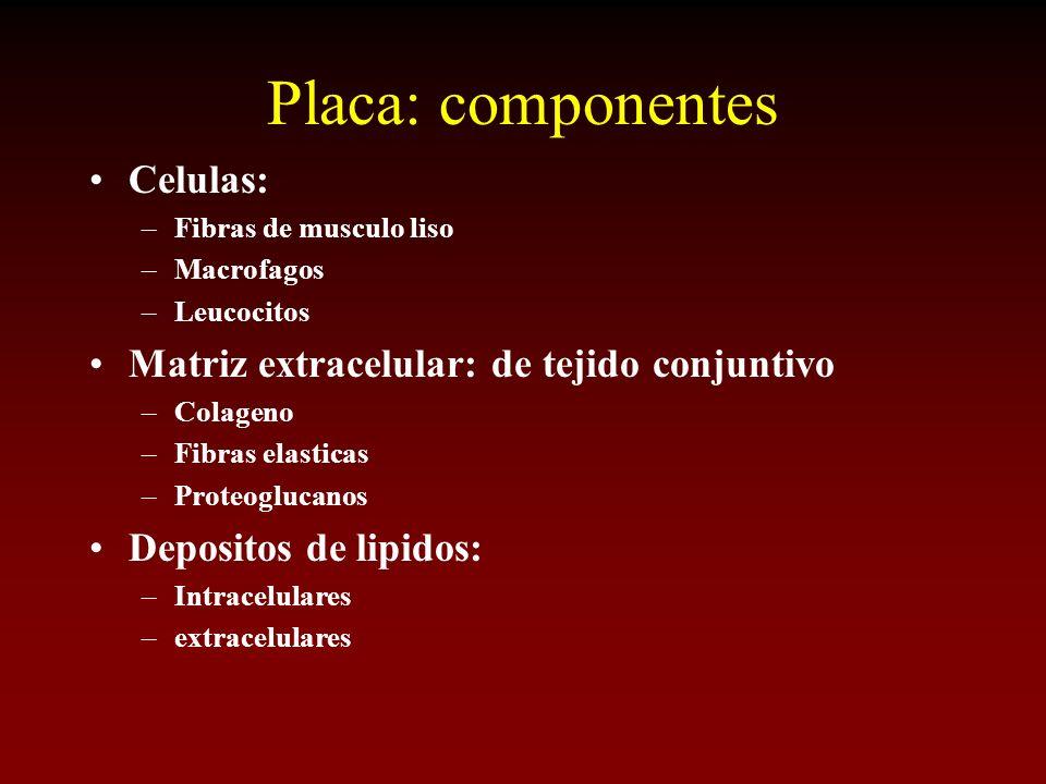 Placa: componentes Celulas: Matriz extracelular: de tejido conjuntivo