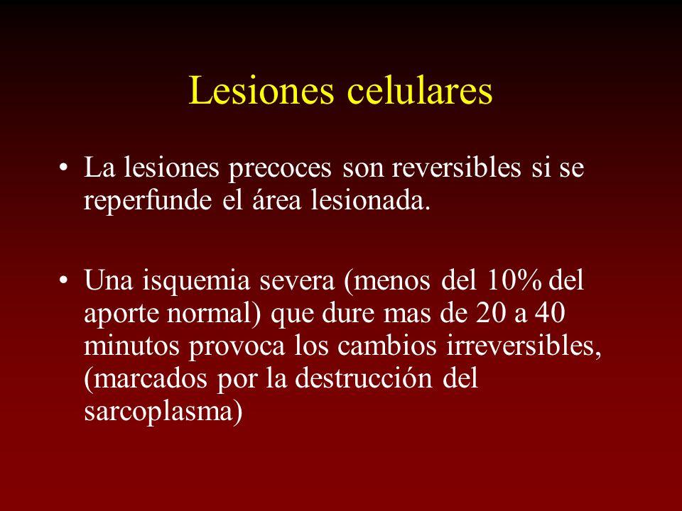 Lesiones celulares La lesiones precoces son reversibles si se reperfunde el área lesionada.