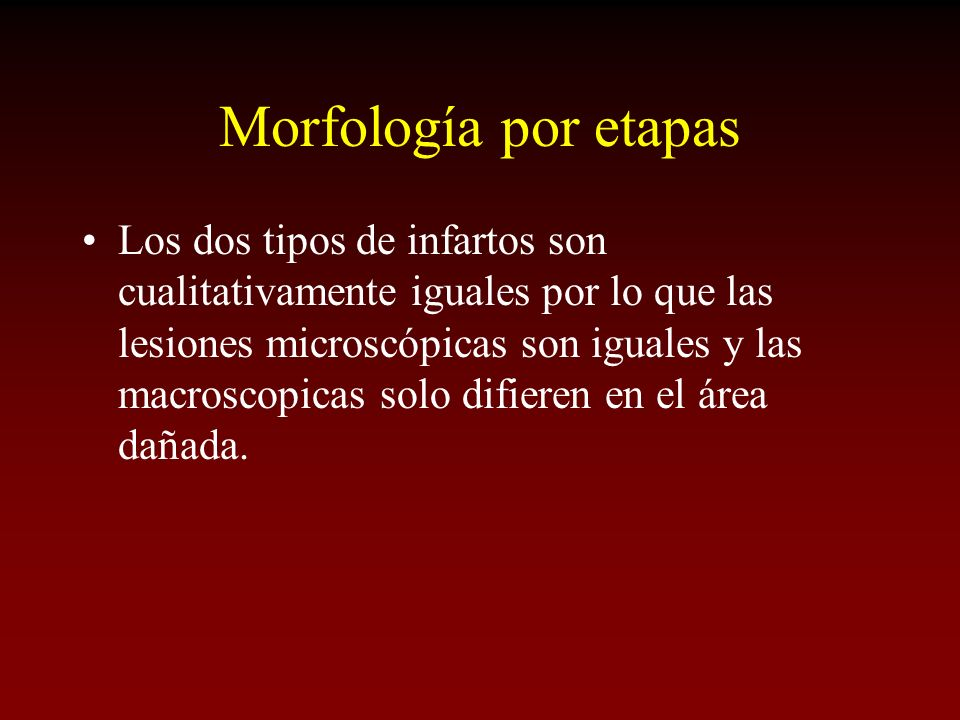 Morfología por etapas