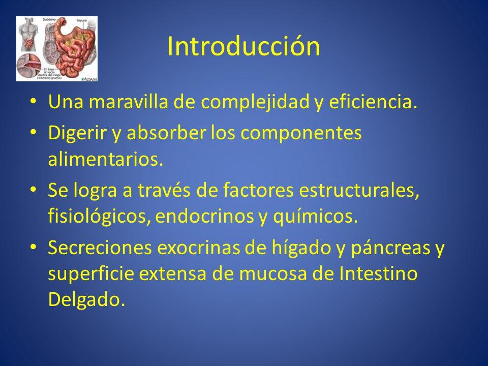 Introducción Una maravilla de complejidad y eficiencia.