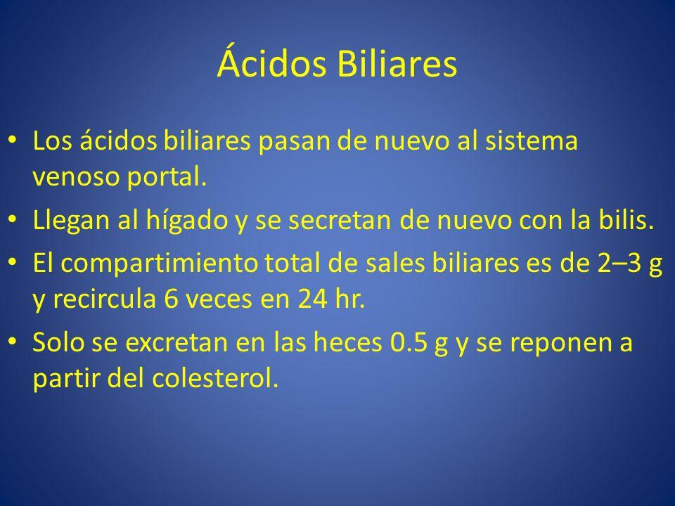 Ácidos Biliares Los ácidos biliares pasan de nuevo al sistema venoso portal. Llegan al hígado y se secretan de nuevo con la bilis.
