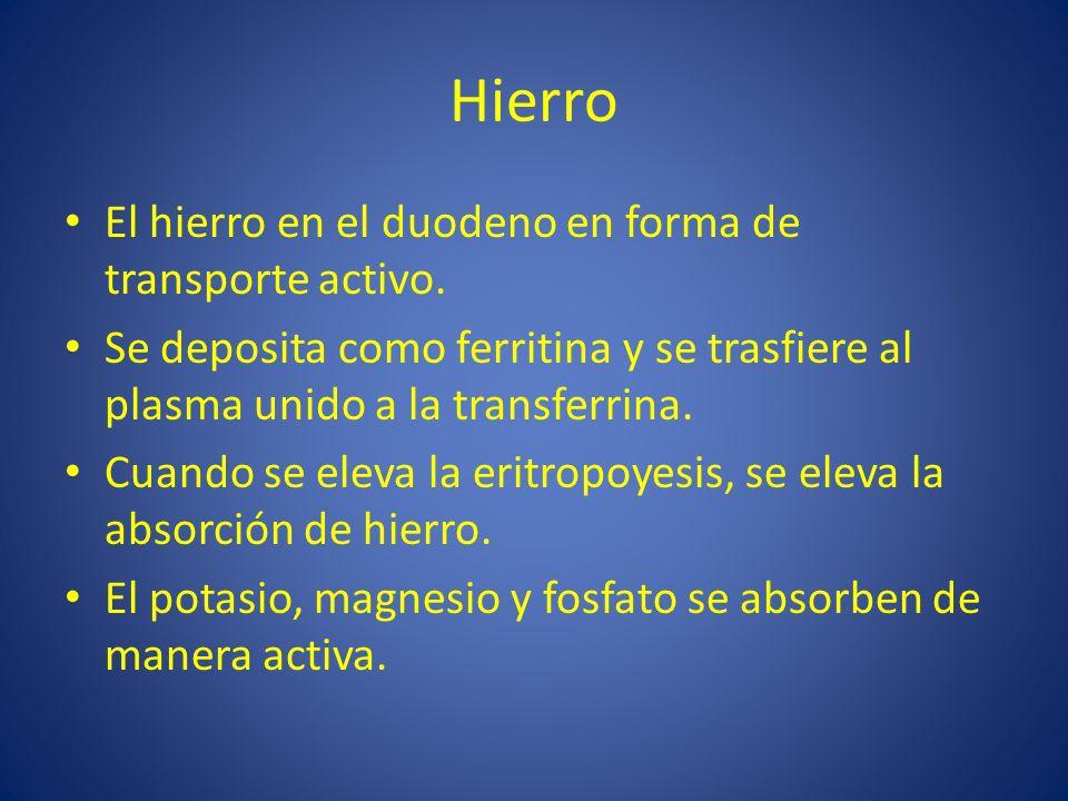Hierro El hierro en el duodeno en forma de transporte activo.