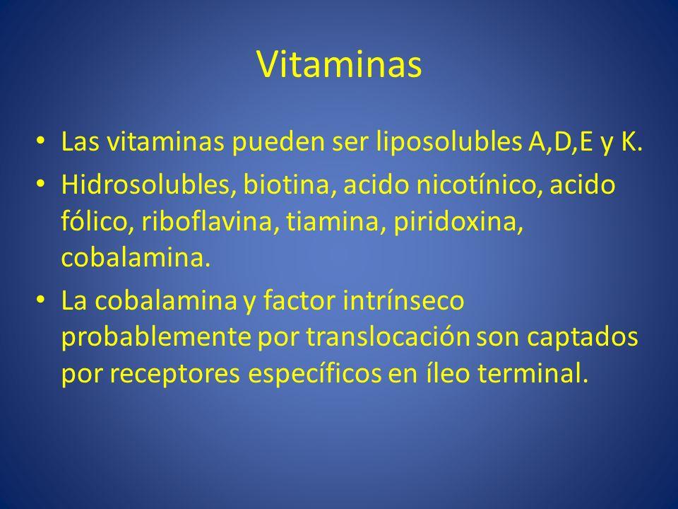 Vitaminas Las vitaminas pueden ser liposolubles A,D,E y K.