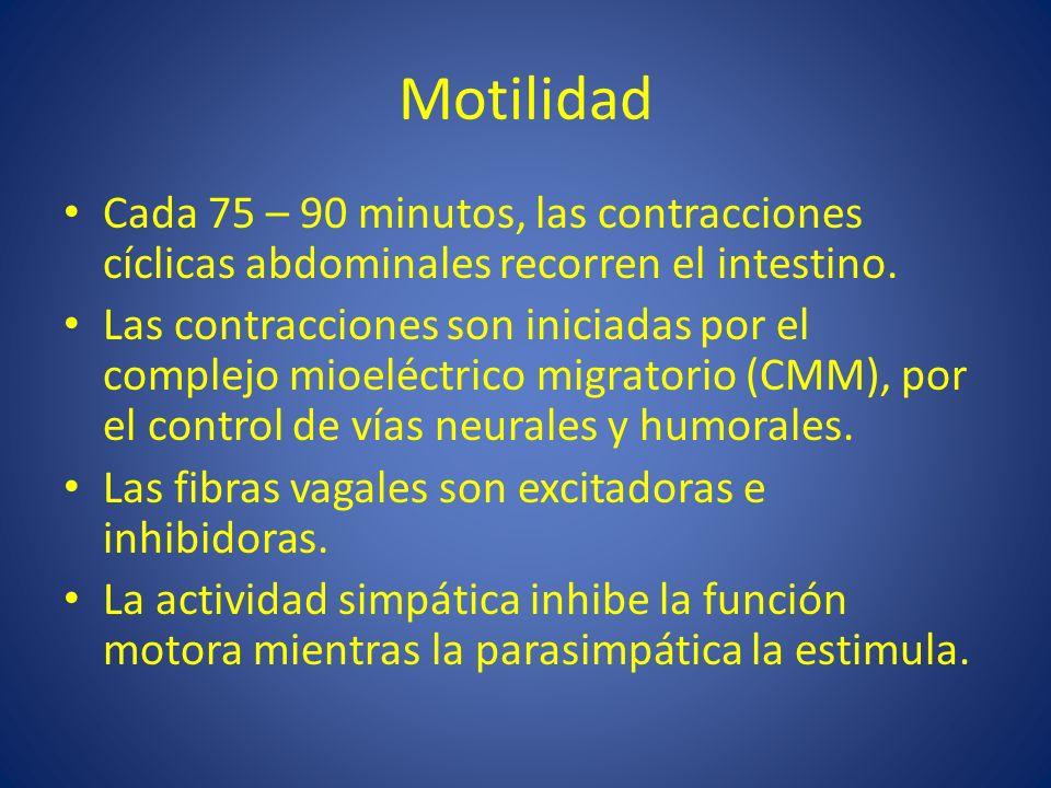 Motilidad Cada 75 – 90 minutos, las contracciones cíclicas abdominales recorren el intestino.