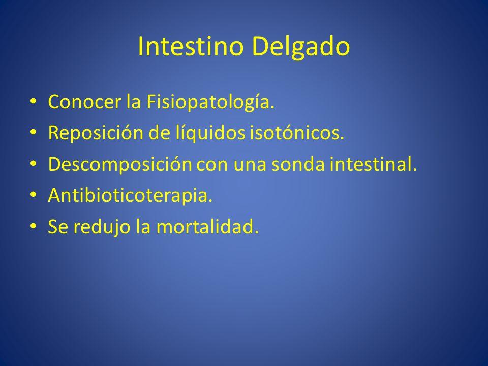 Intestino Delgado Conocer la Fisiopatología.