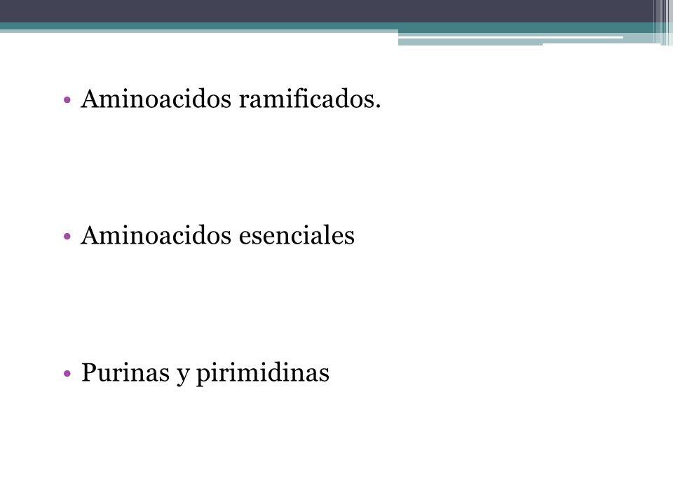 Aminoacidos ramificados.