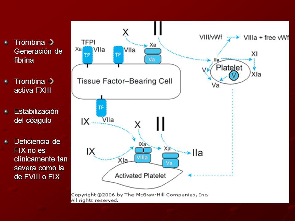 Trombina  Generación de fibrina