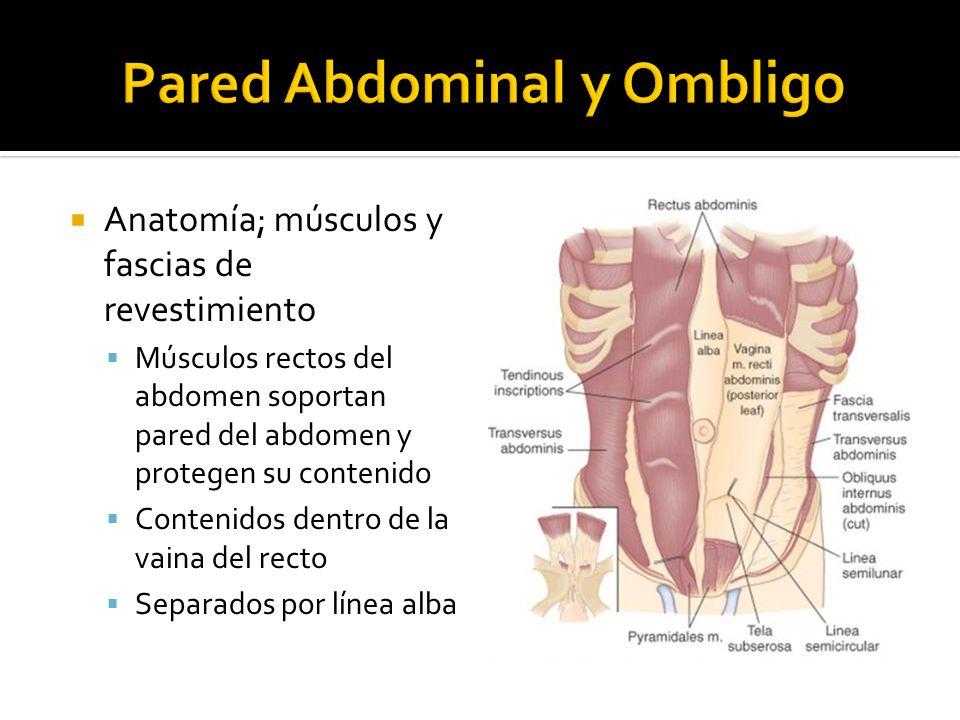Pared Abdominal y Ombligo