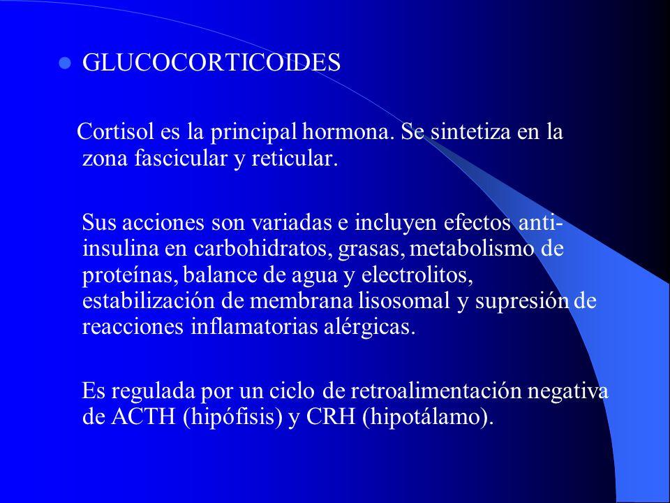 GLUCOCORTICOIDES Cortisol es la principal hormona. Se sintetiza en la zona fascicular y reticular.