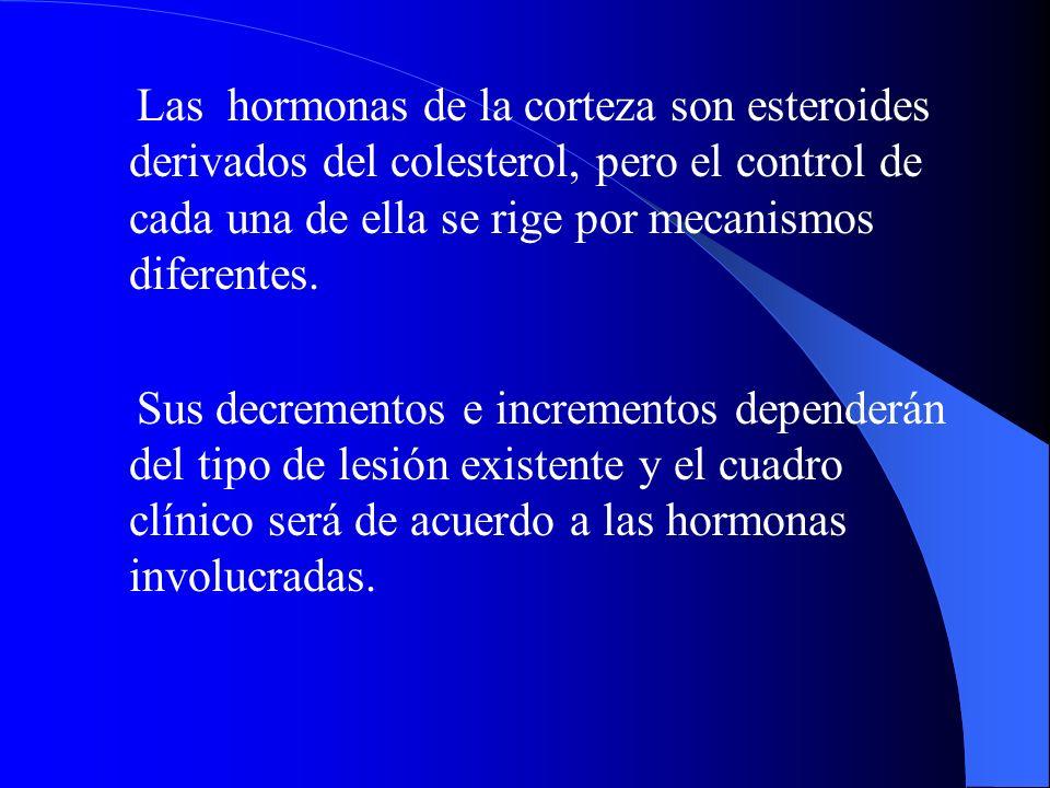 Las hormonas de la corteza son esteroides derivados del colesterol, pero el control de cada una de ella se rige por mecanismos diferentes.