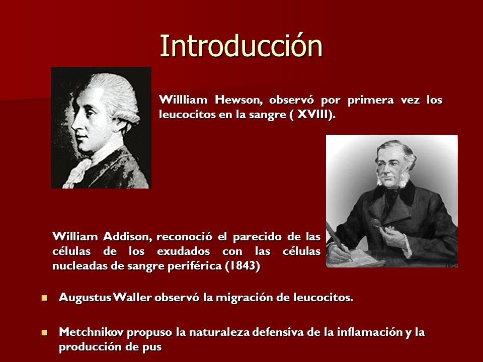 IntroducciónWillliam Hewson, observó por primera vez los leucocitos en la sangre ( XVIII).