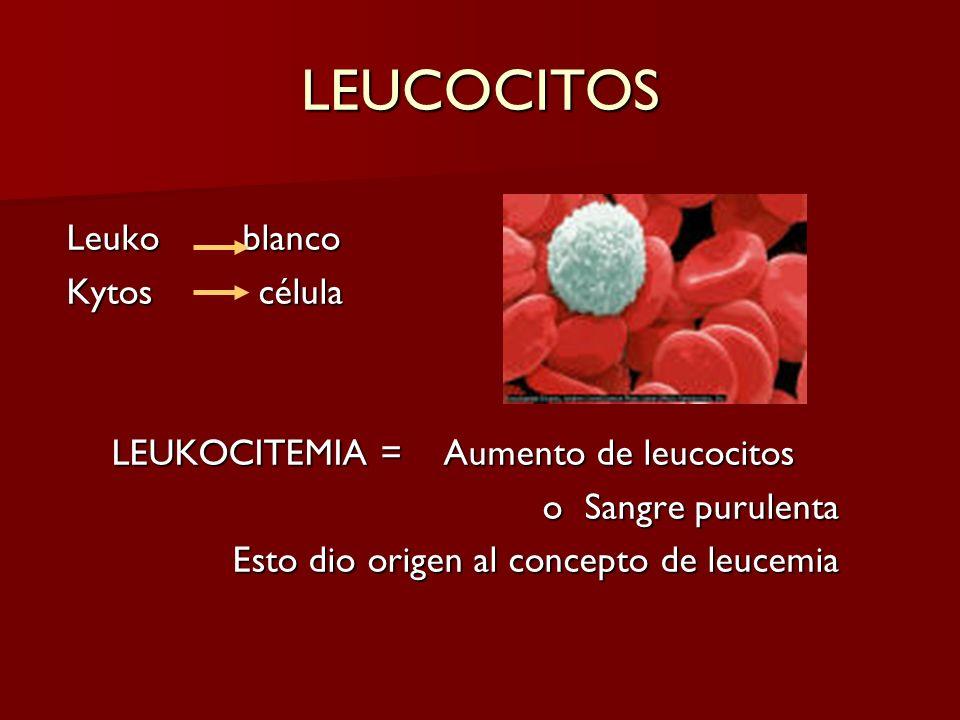 LEUKOCITEMIA = Aumento de leucocitos