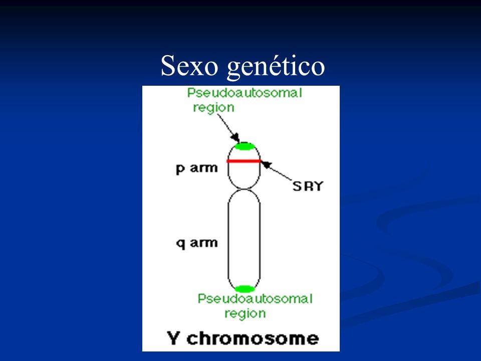 Sexo genético