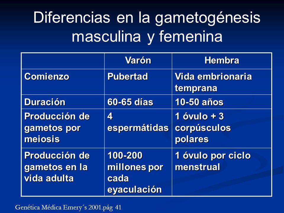 Diferencias en la gametogénesis masculina y femenina