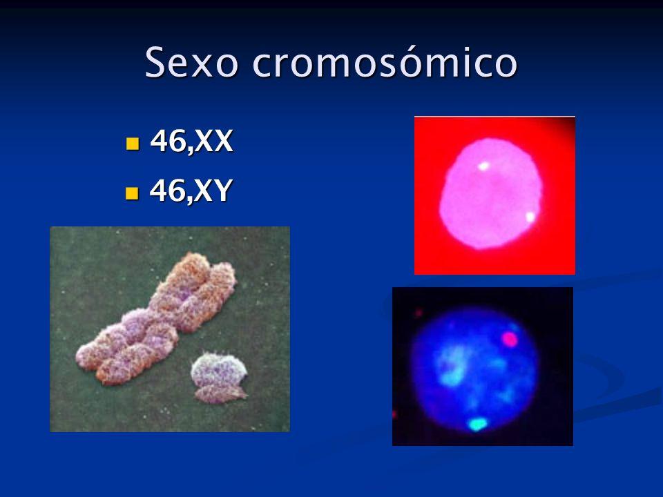 Sexo cromosómico 46,XX 46,XY