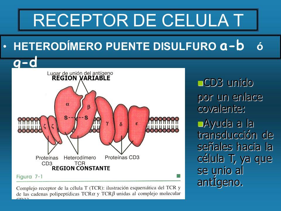 RECEPTOR DE CELULA T HETERODÍMERO PUENTE DISULFURO a-b ó g-d CD3 unido